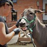 Aktuelles - Zahnbehandlung bei Lucy